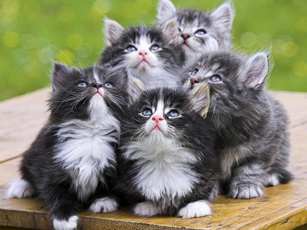 детские песни про кошек слушать подряд