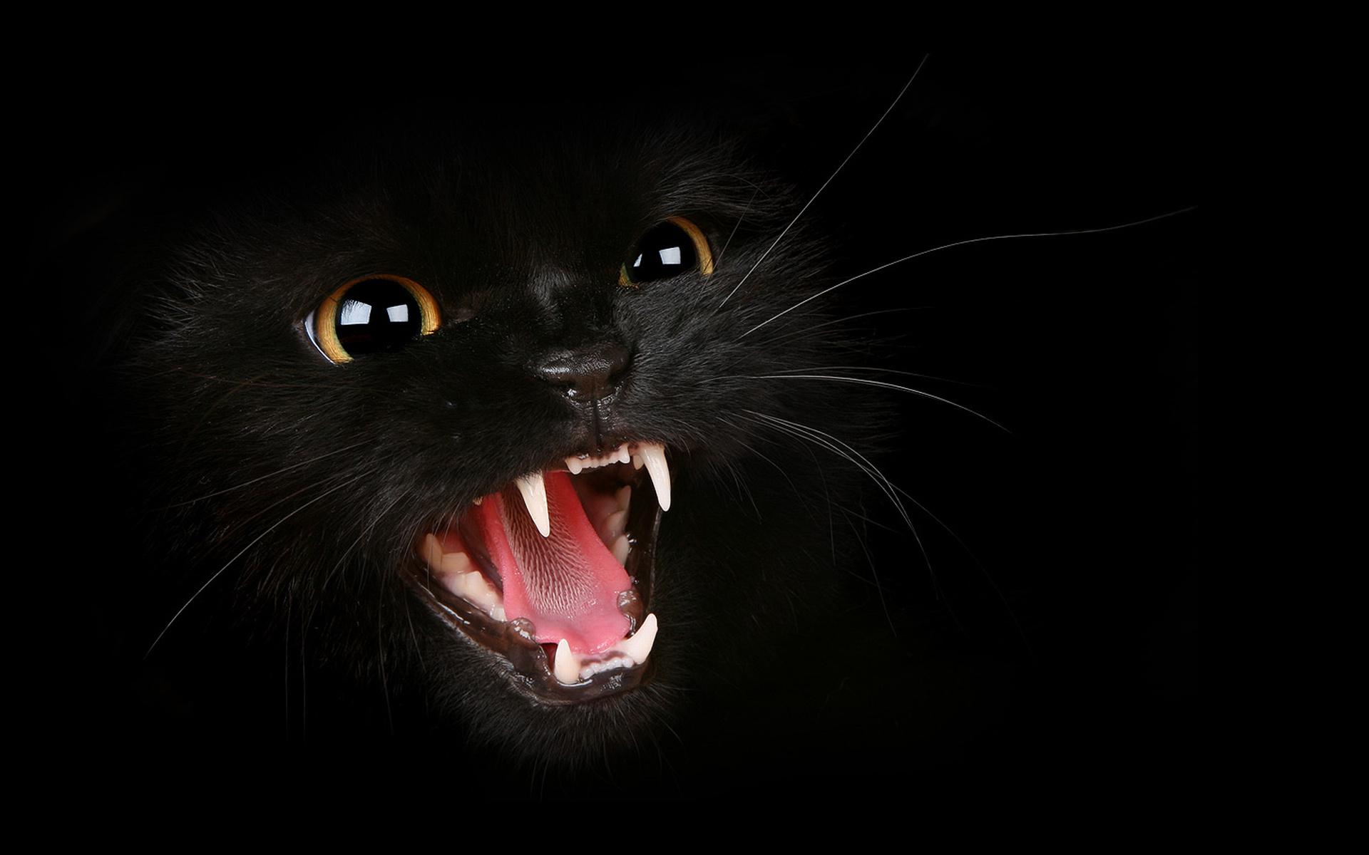 А твардовский памяти моего кота