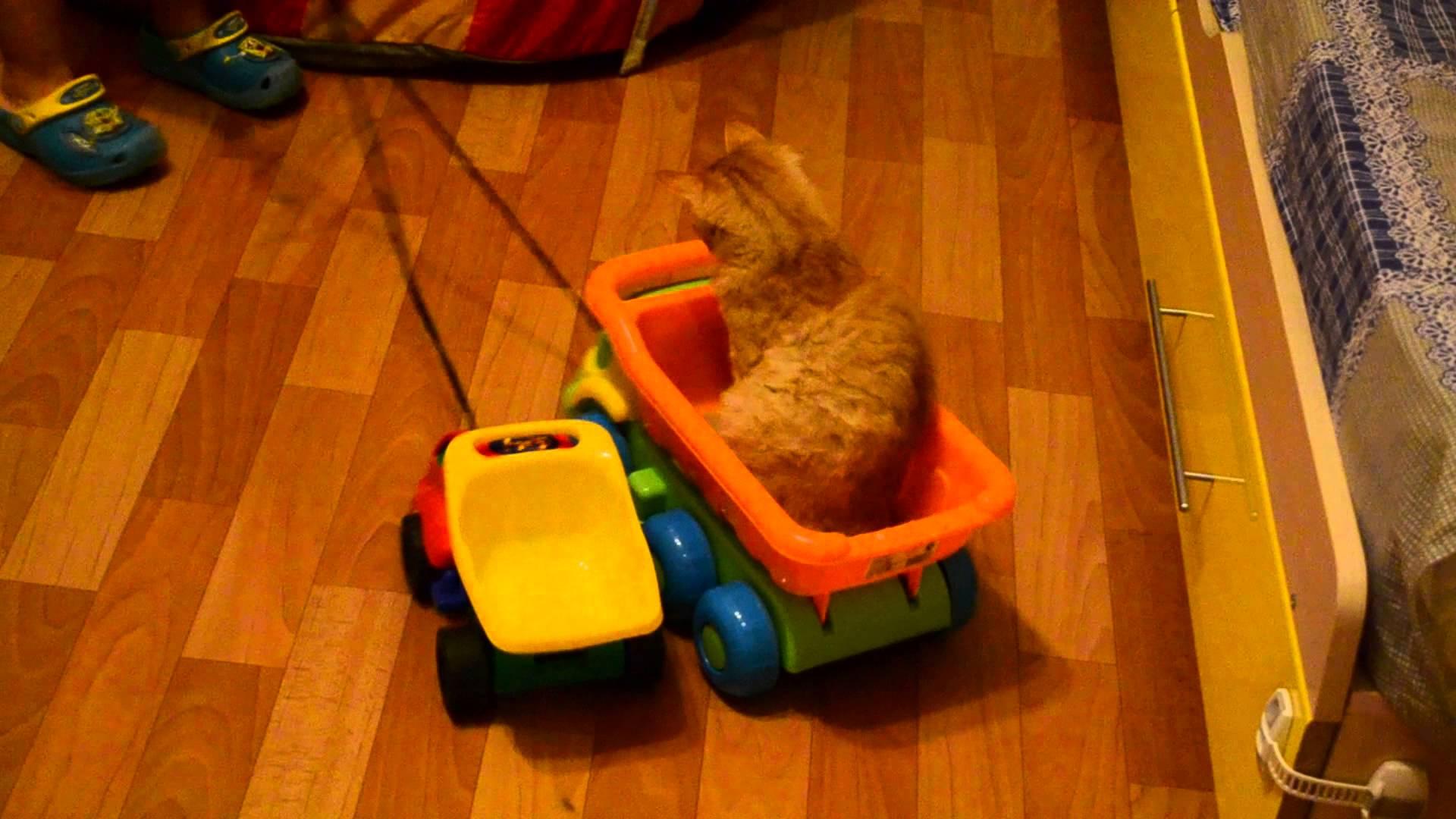 кот в грузовике