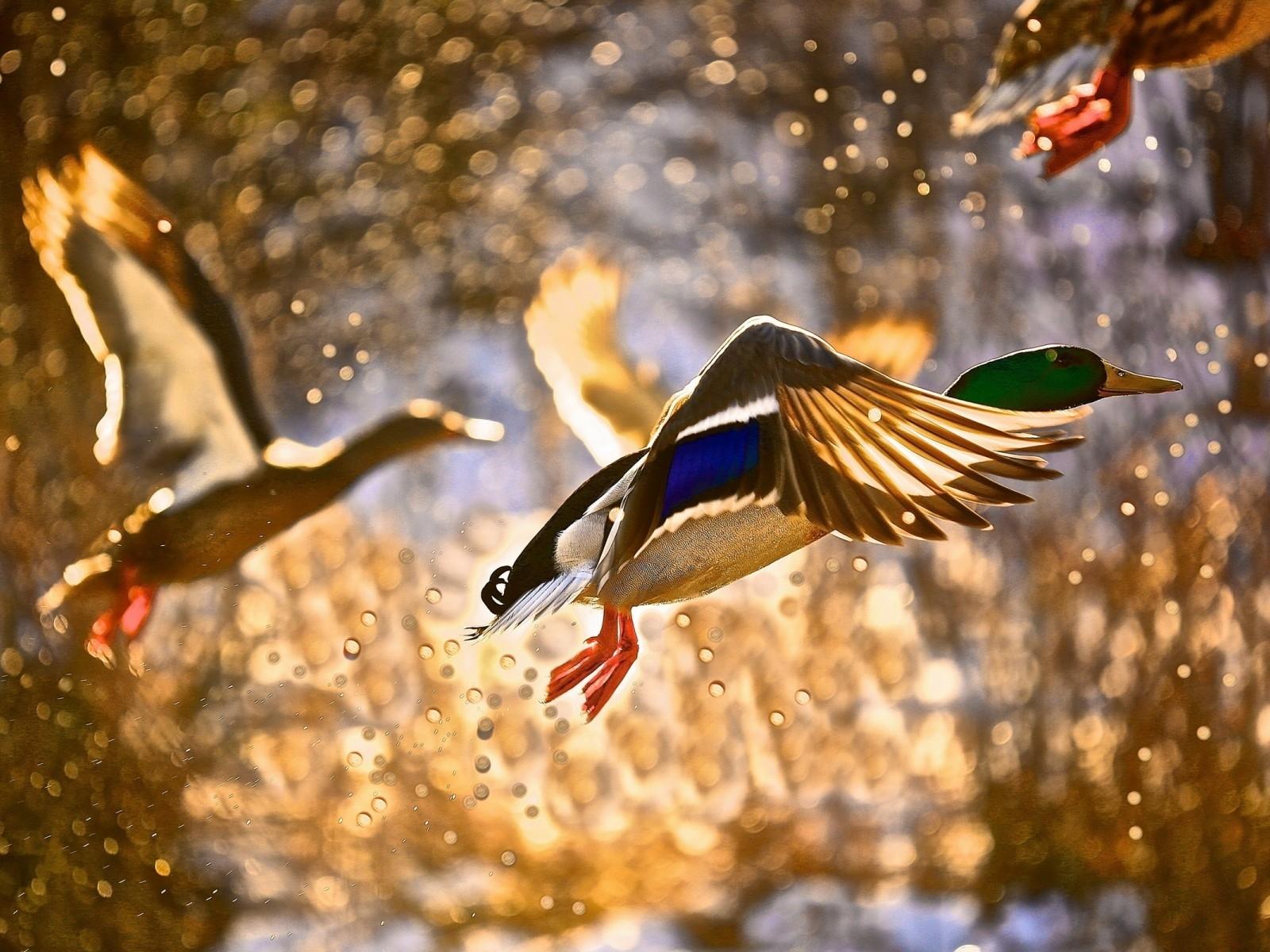 птицы олетают
