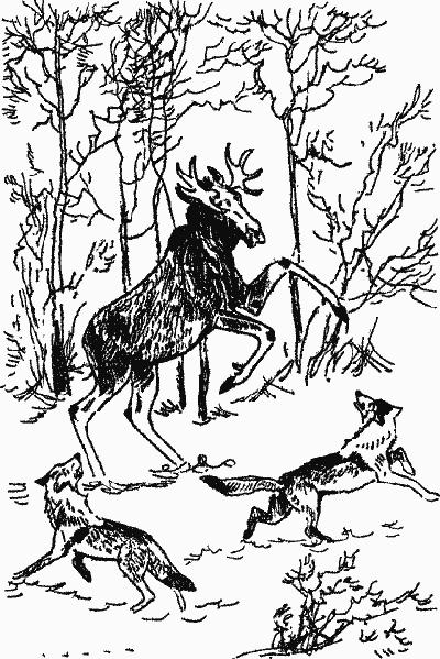Товарищи по охоте
