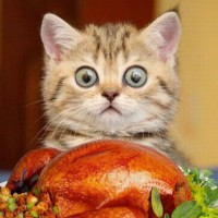кошка смотрит на курицу