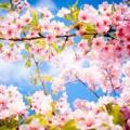 Сказка Весна. Редьярд Киплинг.