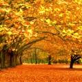 Стихотворение Золотая осень. Агния Барто.
