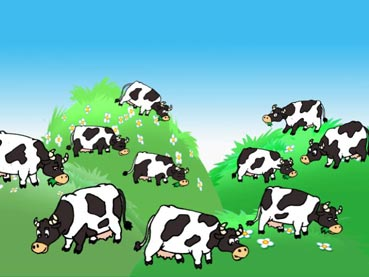 33 коровы