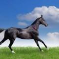 Белый принц на черном коне