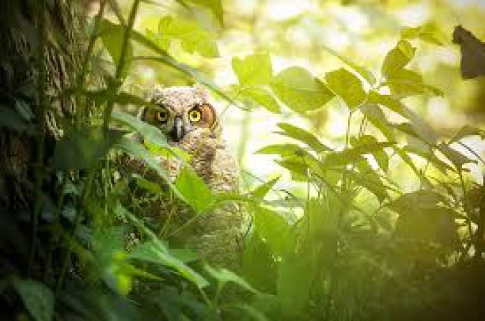 Глаза в кустах