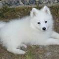 Страшилка Белая собачка.