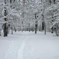 Всюду снег